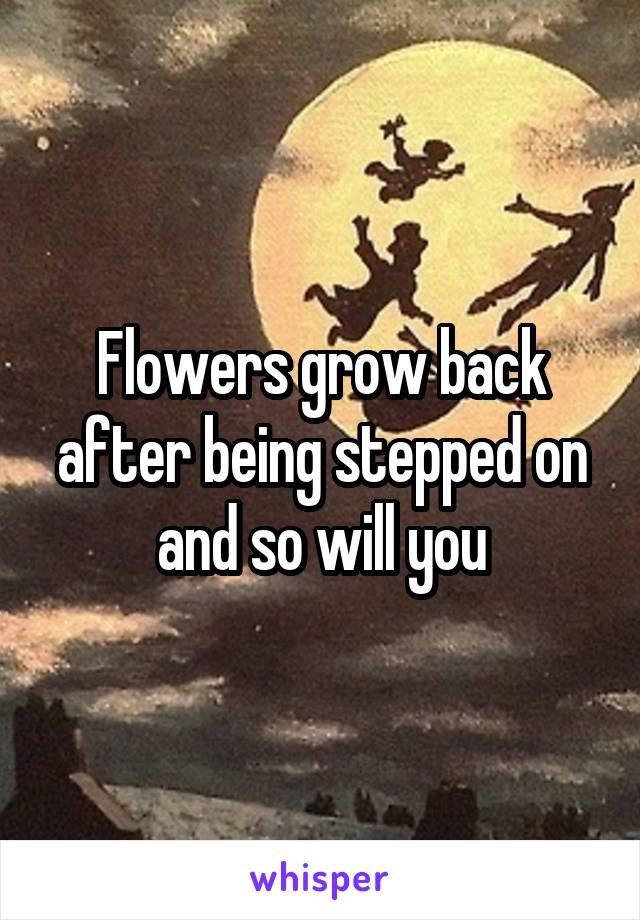Flowers grow back after being stepped on and so will you