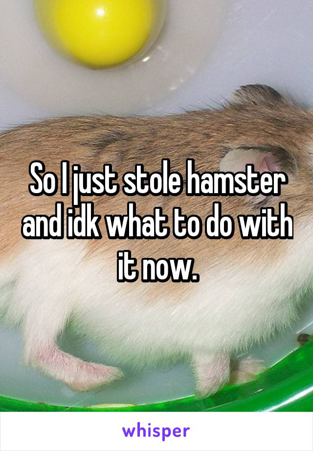 So I just stole hamster and idk what to do with it now.