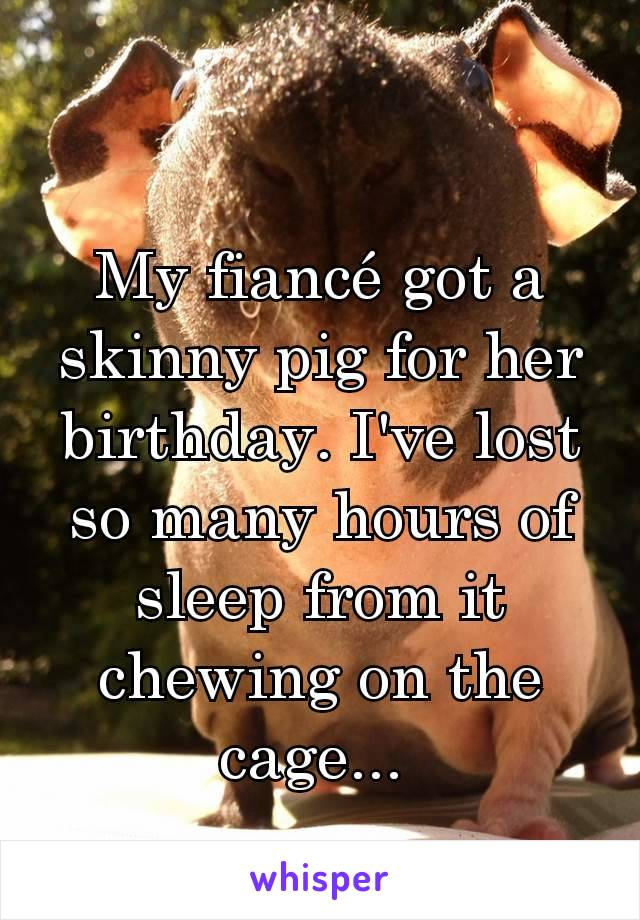 My fiancé got a skinny pig for her birthday. I've lost so many hours of sleep from it chewing on the cage...