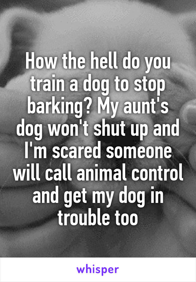 How the hell do you train a dog to stop barking? My aunt's dog won't shut up and I'm scared someone will call animal control and get my dog in trouble too