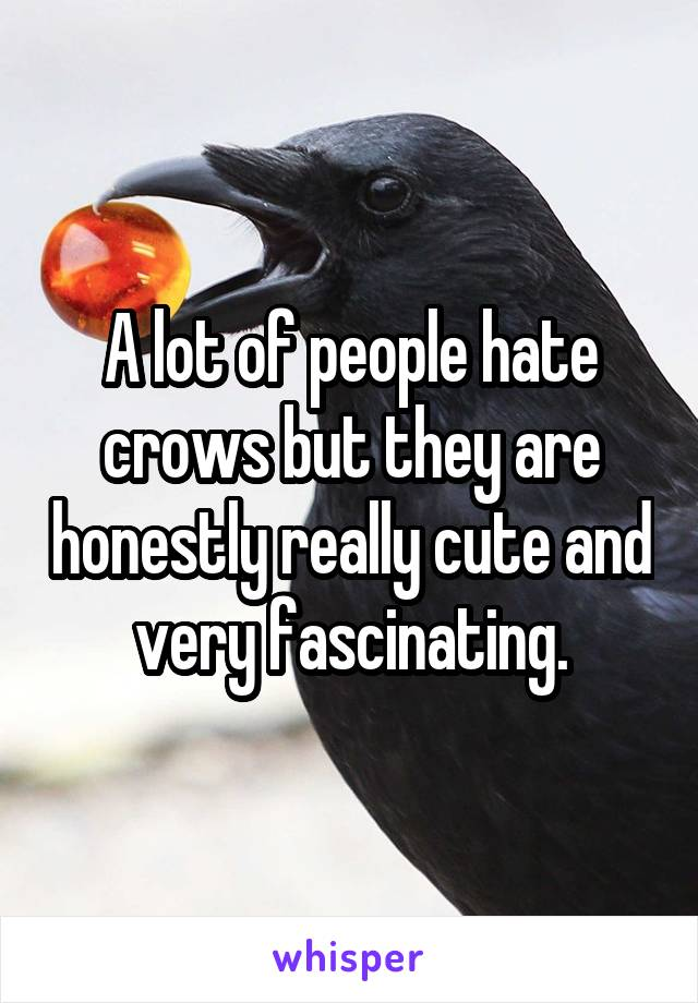 A lot of people hate crows but they are honestly really cute and very fascinating.