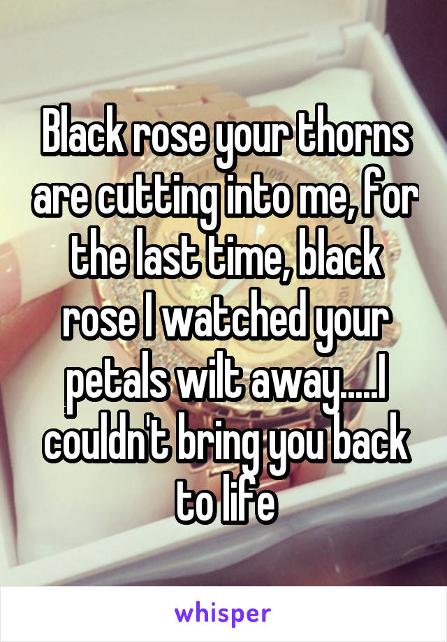 Black rose your thorns are cutting into me, for the last time, black rose I watched your petals wilt away.....I couldn't bring you back to life