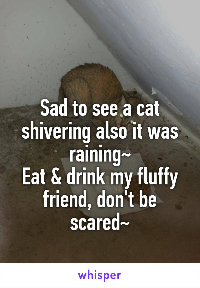 Sad to see a cat shivering also it was raining~ Eat & drink my fluffy friend, don't be scared~