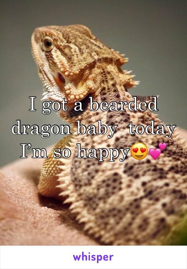 I got a bearded dragon baby  today I'm so happy😍💕