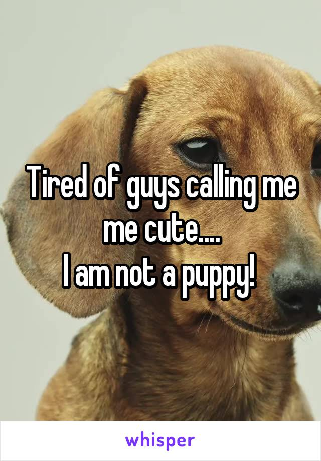 Tired of guys calling me me cute.... I am not a puppy!