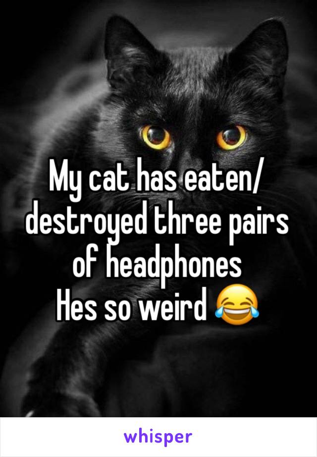 My cat has eaten/destroyed three pairs of headphones Hes so weird 😂