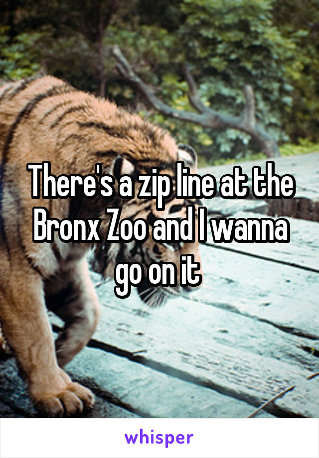 There's a zip line at the Bronx Zoo and I wanna go on it