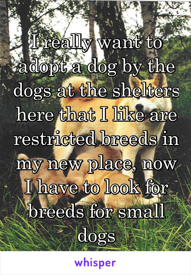 I really want to adopt a dog by the dogs at the shelters here that I like are restricted breeds in my new place, now I have to look for breeds for small dogs