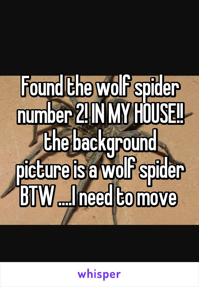 Found the wolf spider number 2! IN MY HOUSE!! the background picture is a wolf spider BTW ....I need to move
