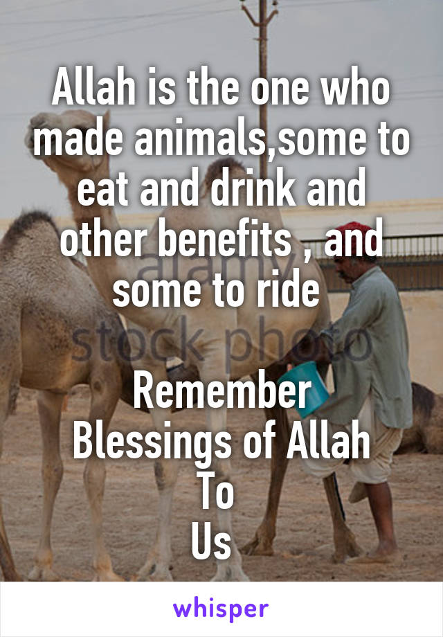 Allah is the one who made animals,some to eat and drink and other benefits , and some to ride   Remember Blessings of Allah To  Us