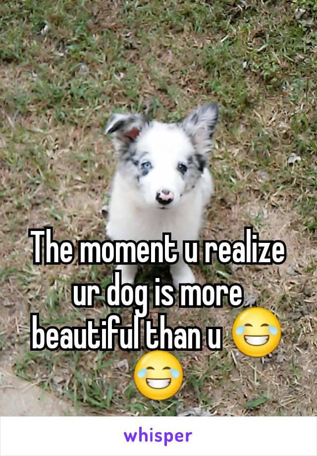 The moment u realize ur dog is more beautiful than u 😂😂
