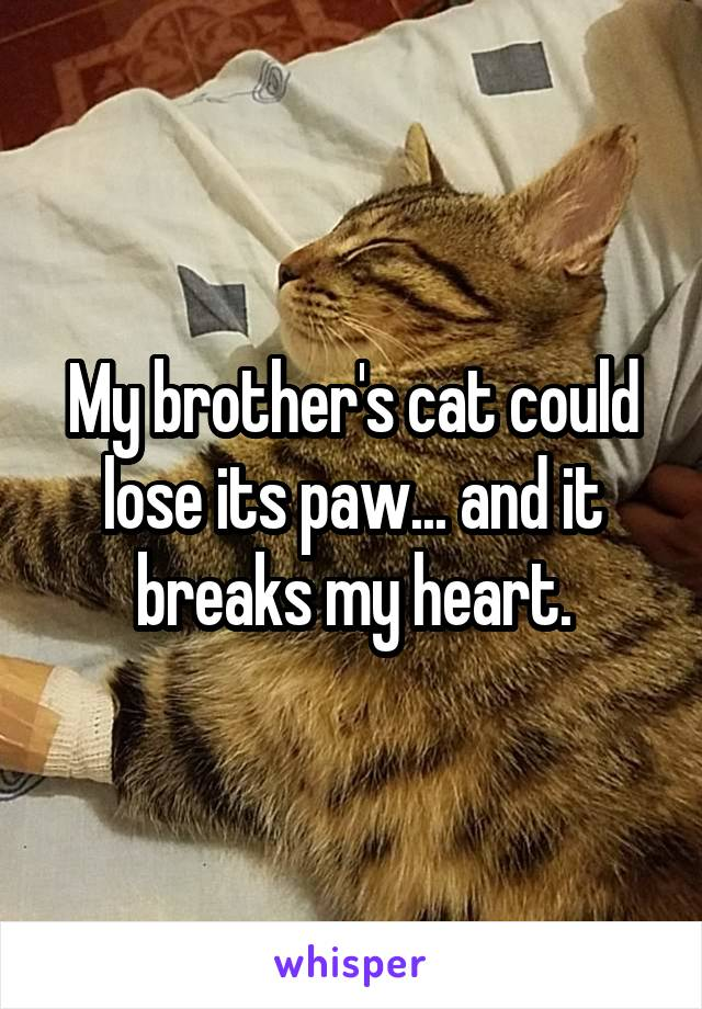 My brother's cat could lose its paw... and it breaks my heart.