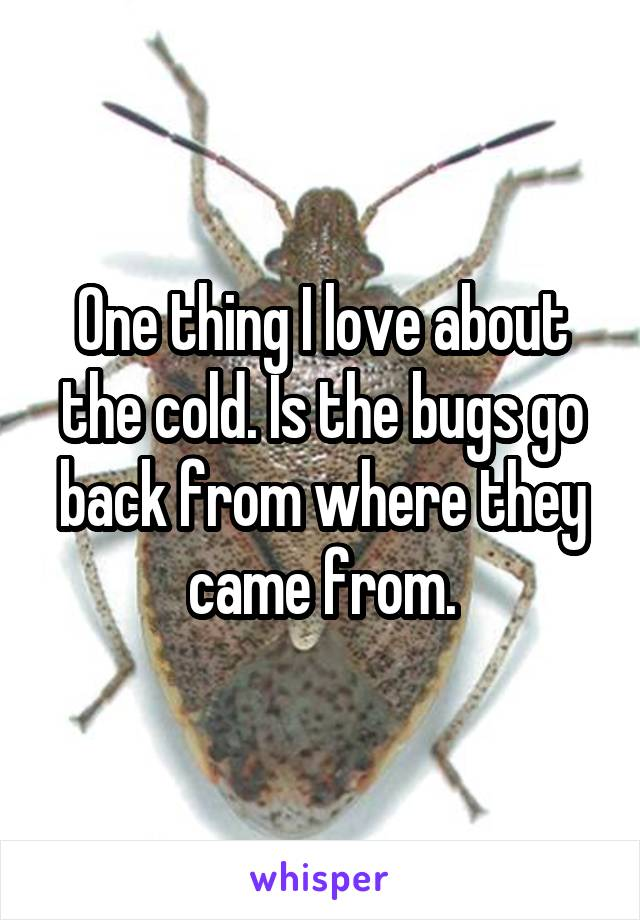 One thing I love about the cold. Is the bugs go back from where they came from.
