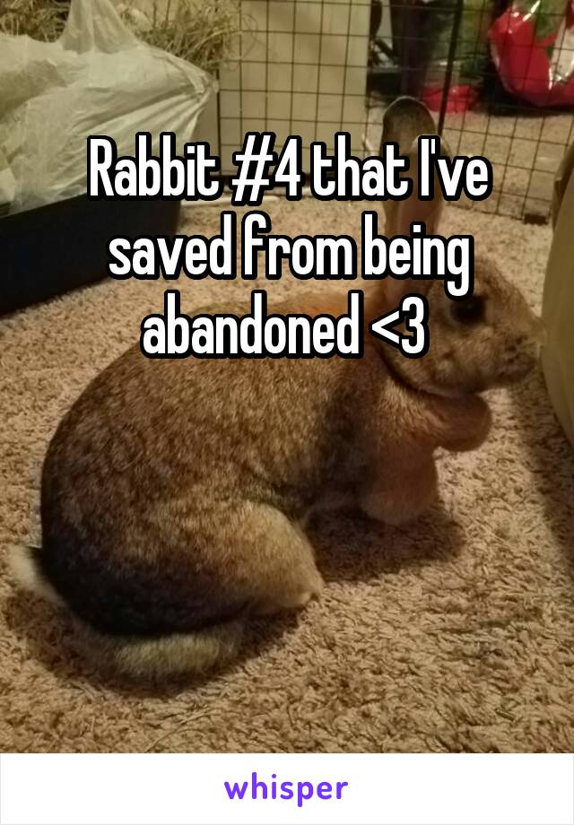 Rabbit #4 that I've saved from being abandoned <3