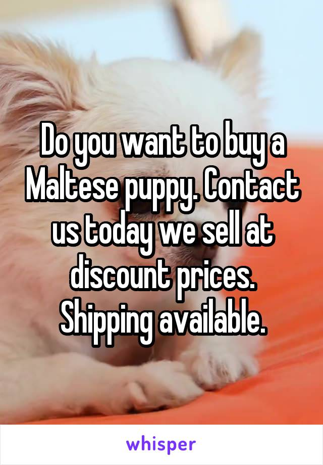 Do you want to buy a Maltese puppy. Contact us today we sell at discount prices. Shipping available.