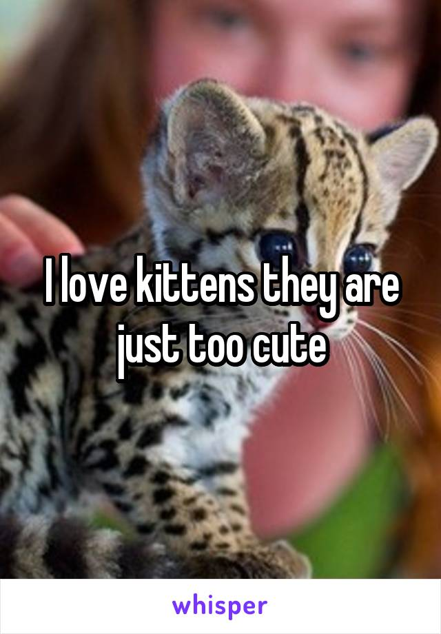 I love kittens they are just too cute