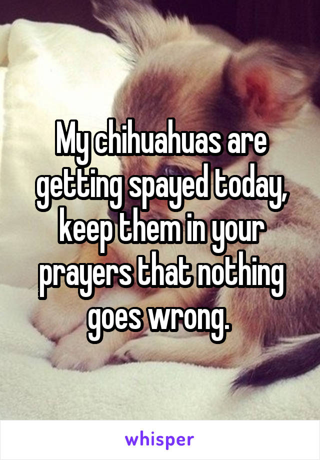 My chihuahuas are getting spayed today, keep them in your prayers that nothing goes wrong.
