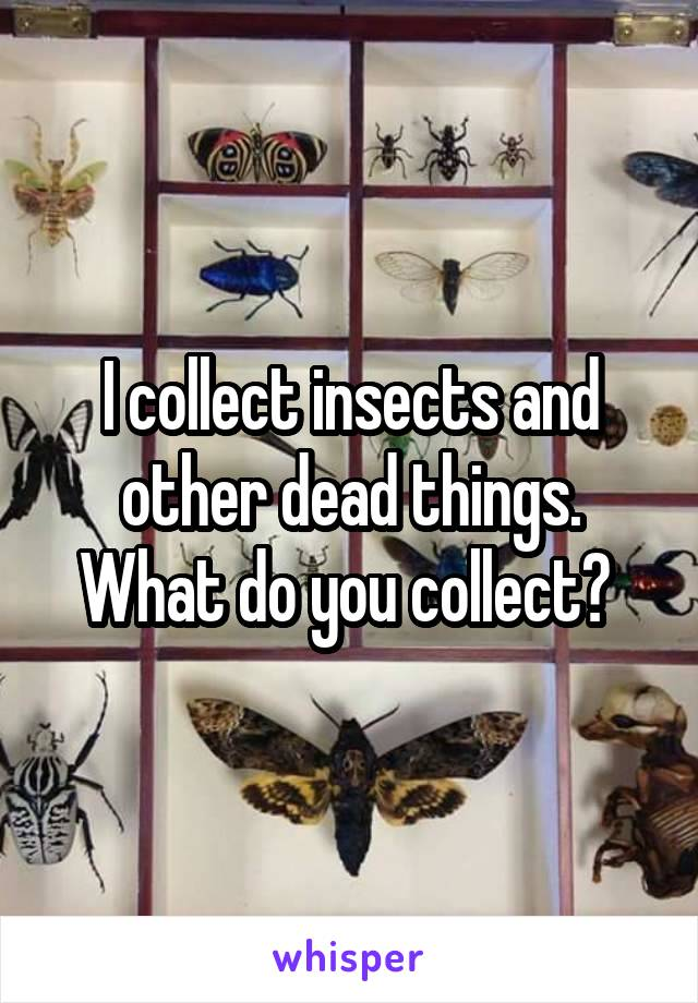 I collect insects and other dead things. What do you collect?