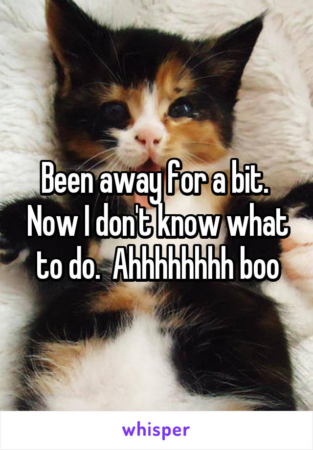 Been away for a bit.  Now I don't know what to do.  Ahhhhhhhh boo