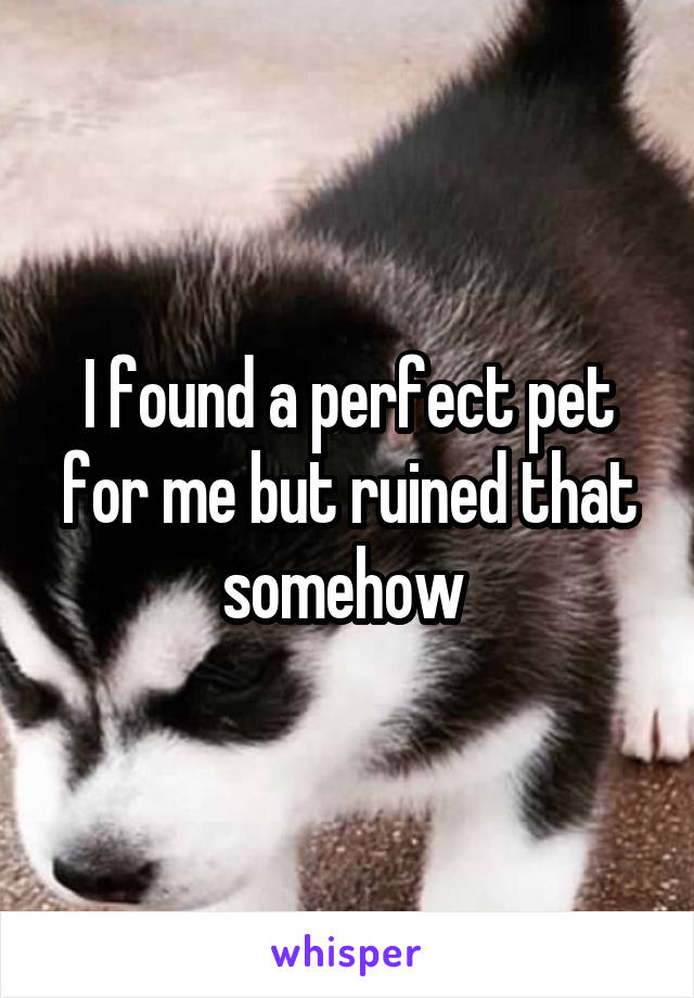 I found a perfect pet for me but ruined that somehow