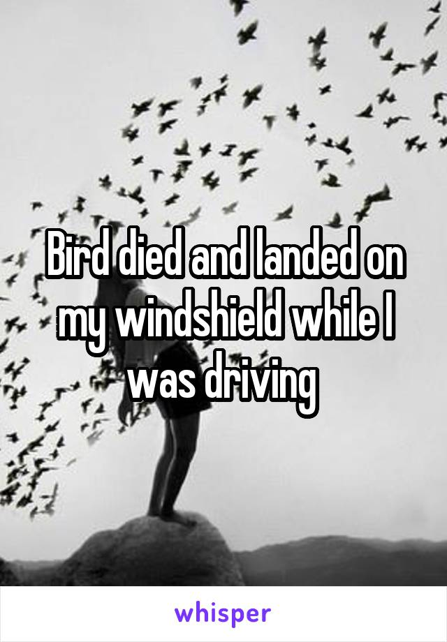 Bird died and landed on my windshield while I was driving