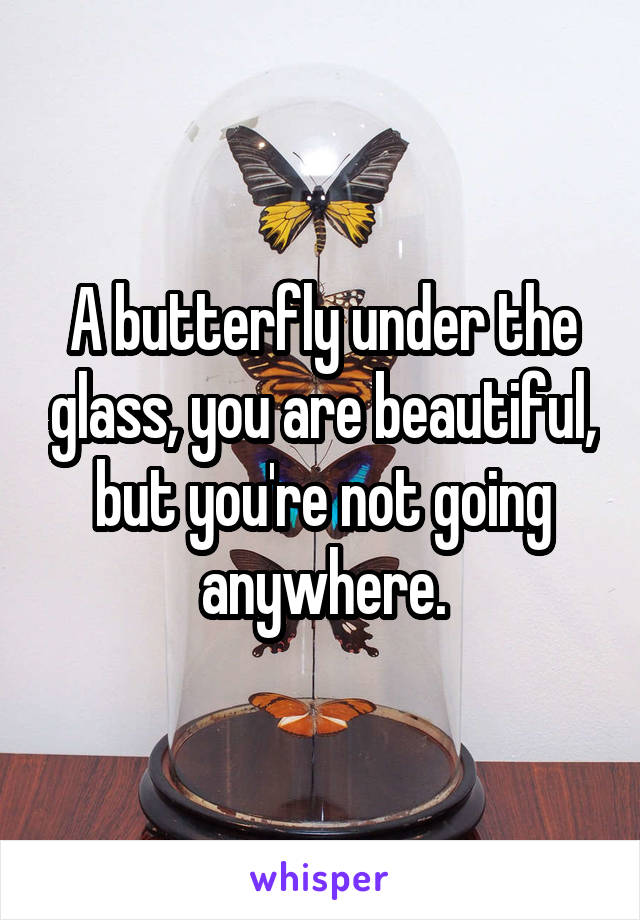 A butterfly under the glass, you are beautiful, but you're not going anywhere.