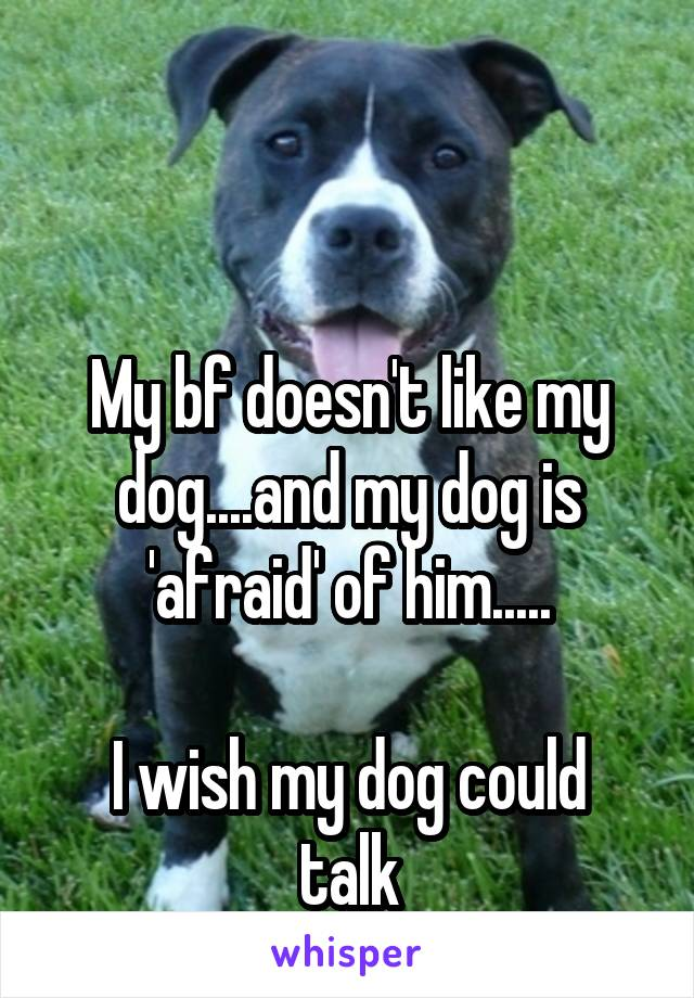 My bf doesn't like my dog....and my dog is 'afraid' of him.....  I wish my dog could talk