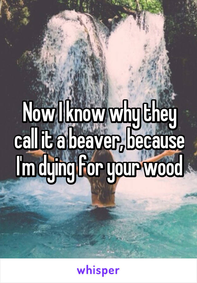 Now I know why they call it a beaver, because I'm dying for your wood