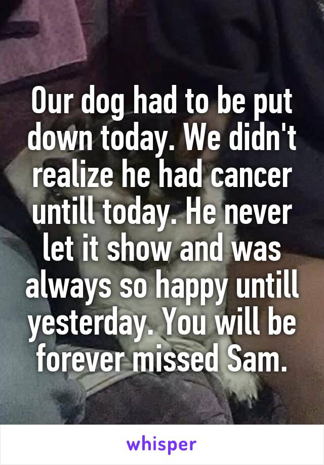 Our dog had to be put down today. We didn't realize he had cancer untill today. He never let it show and was always so happy untill yesterday. You will be forever missed Sam.