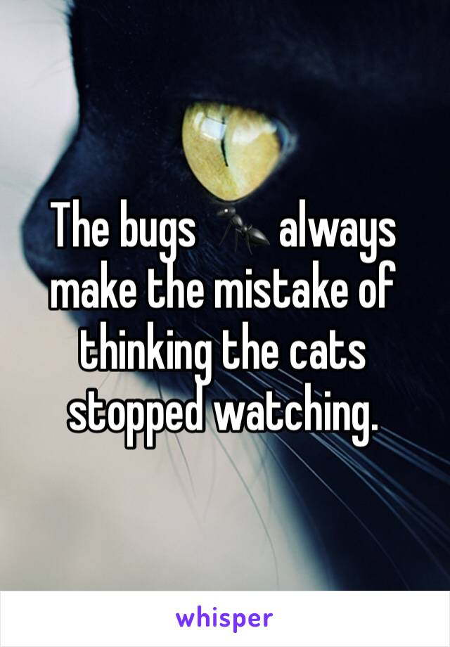 The bugs 🐜 always make the mistake of thinking the cats stopped watching.