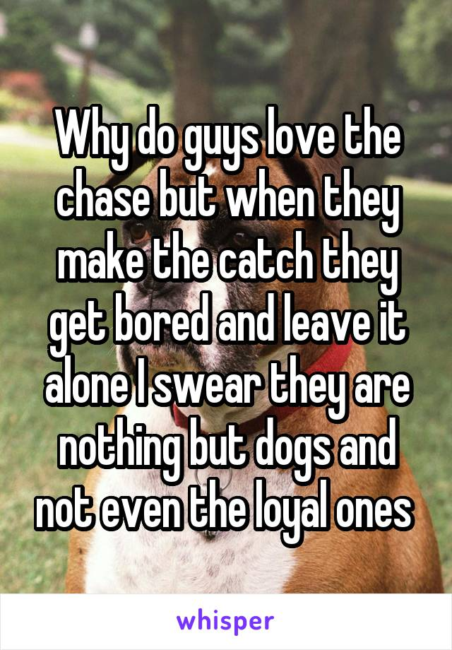 Why do guys love the chase but when they make the catch they get bored and leave it alone I swear they are nothing but dogs and not even the loyal ones