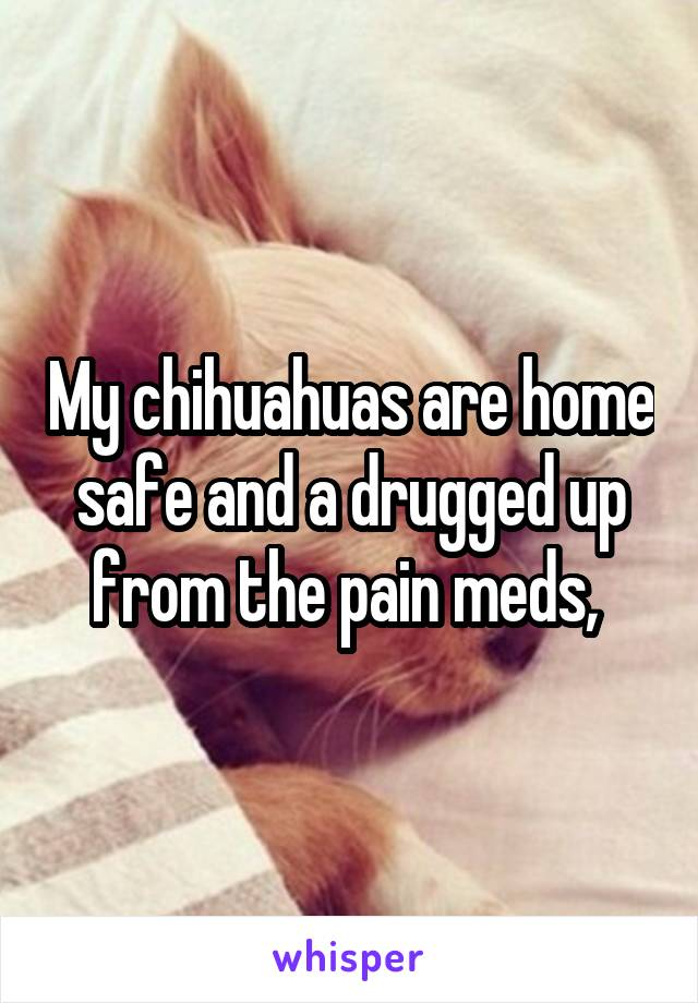 My chihuahuas are home safe and a drugged up from the pain meds,