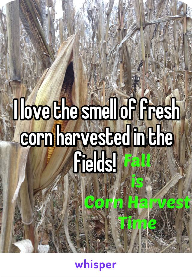 I love the smell of fresh corn harvested in the fields!