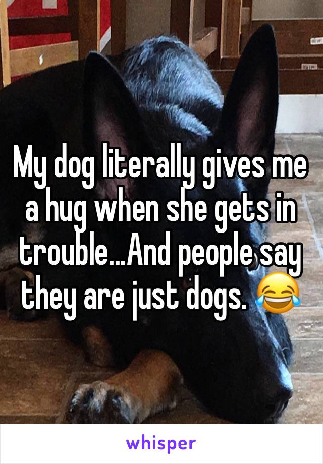 My dog literally gives me a hug when she gets in trouble...And people say they are just dogs. 😂