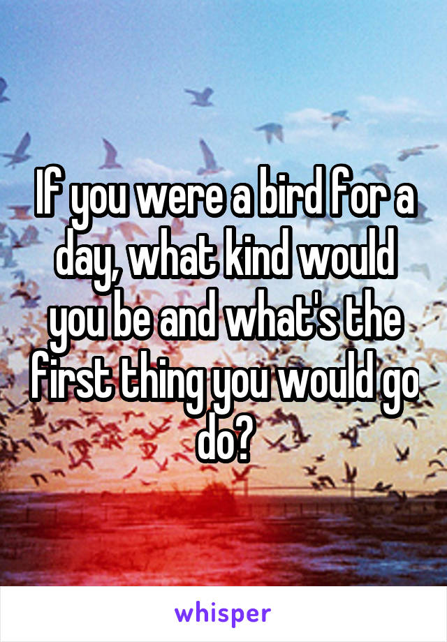 If you were a bird for a day, what kind would you be and what's the first thing you would go do?