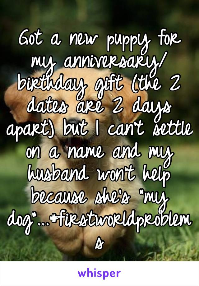 """Got a new puppy for my anniversary/birthday gift (the 2 dates are 2 days apart) but I can't settle on a name and my husband won't help because she's """"my dog""""...#firstworldproblems"""