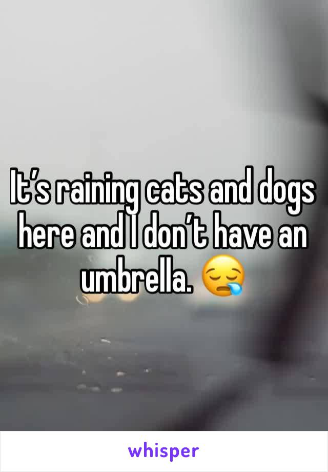 It's raining cats and dogs here and I don't have an umbrella. 😪