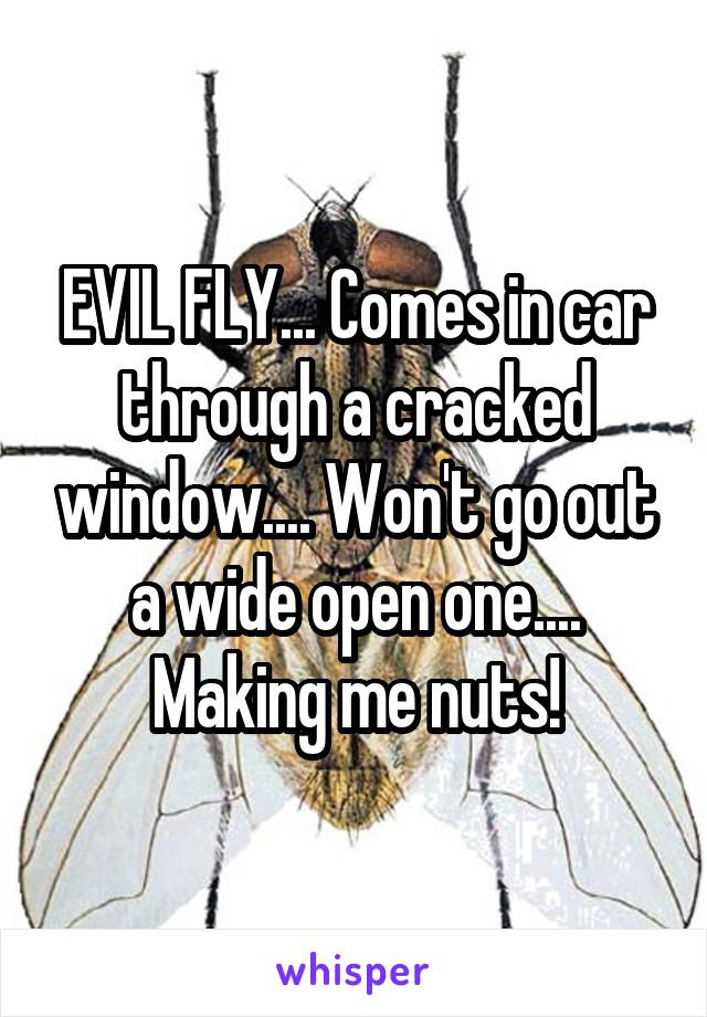 EVIL FLY... Comes in car through a cracked window.... Won't go out a wide open one.... Making me nuts!