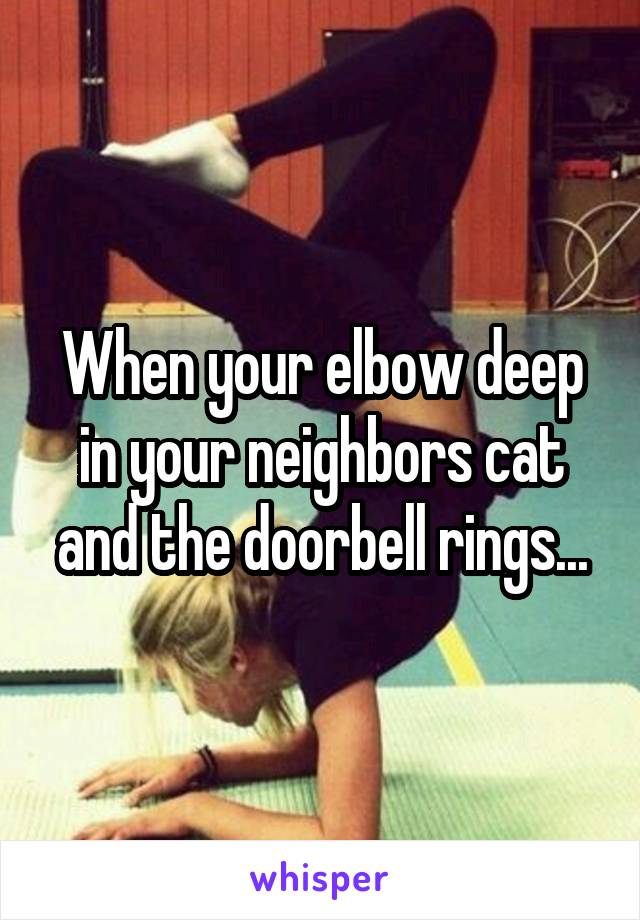 When your elbow deep in your neighbors cat and the doorbell rings...