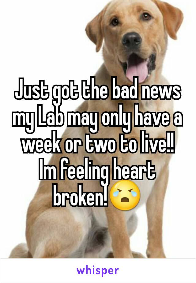 Just got the bad news my Lab may only have a week or two to live!! Im feeling heart broken!😭