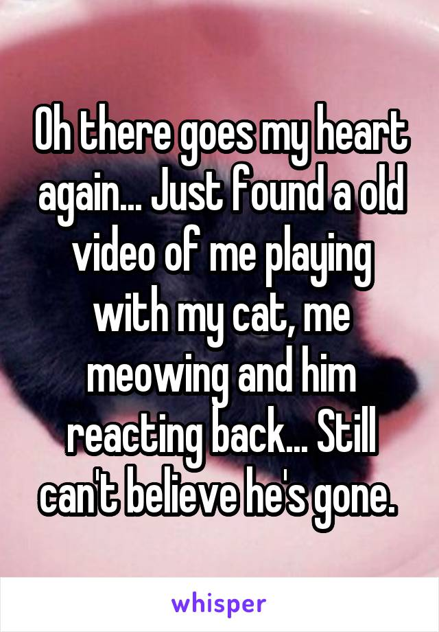 Oh there goes my heart again... Just found a old video of me playing with my cat, me meowing and him reacting back... Still can't believe he's gone.