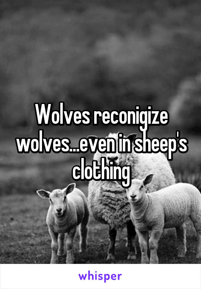 Wolves reconigize wolves...even in sheep's clothing