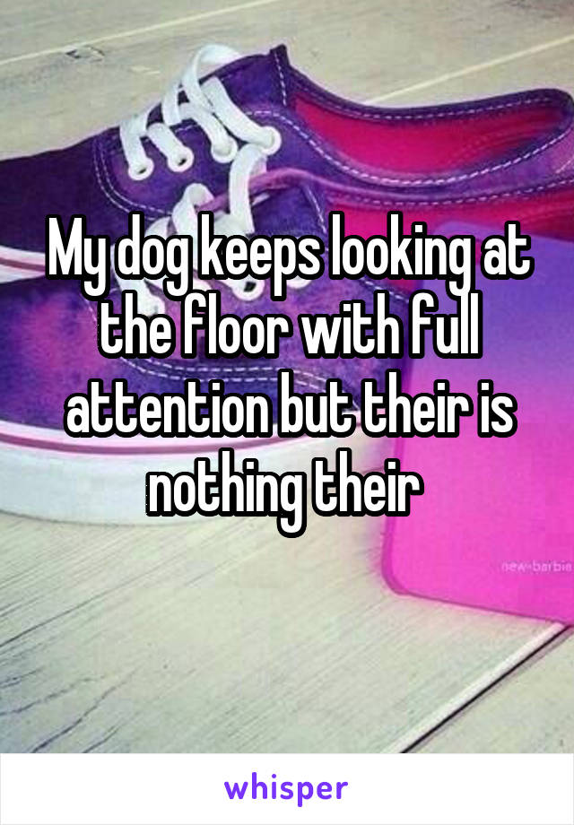 My dog keeps looking at the floor with full attention but their is nothing their
