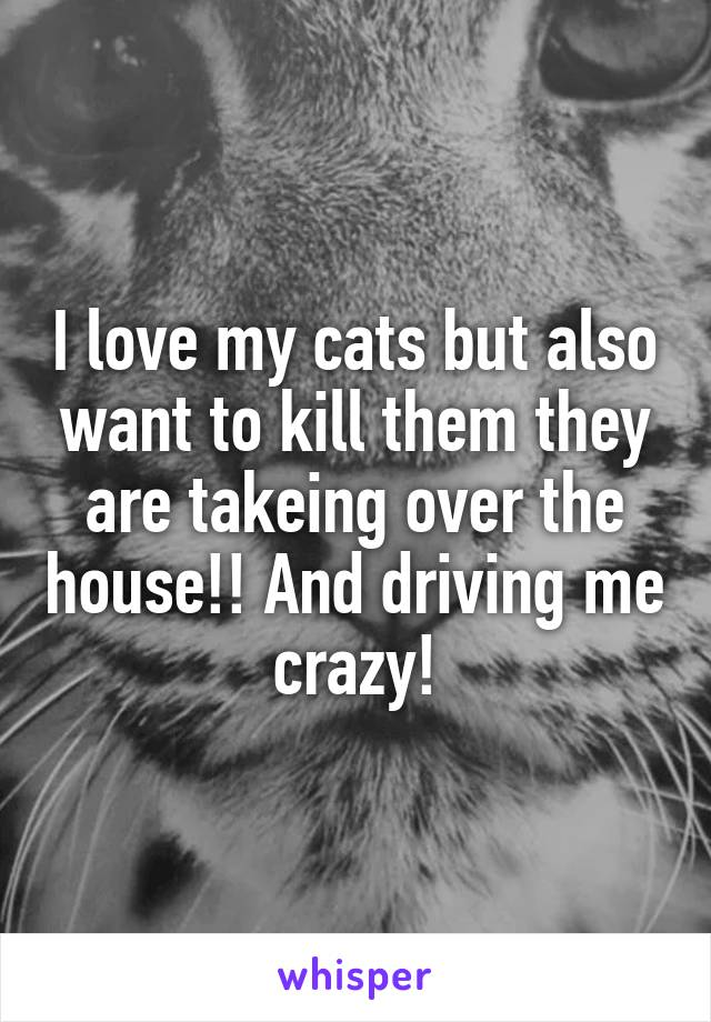 I love my cats but also want to kill them they are takeing over the house!! And driving me crazy!