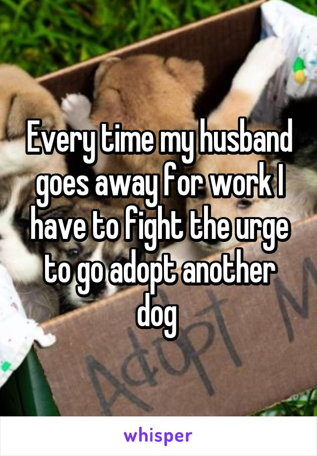Every time my husband goes away for work I have to fight the urge to go adopt another dog