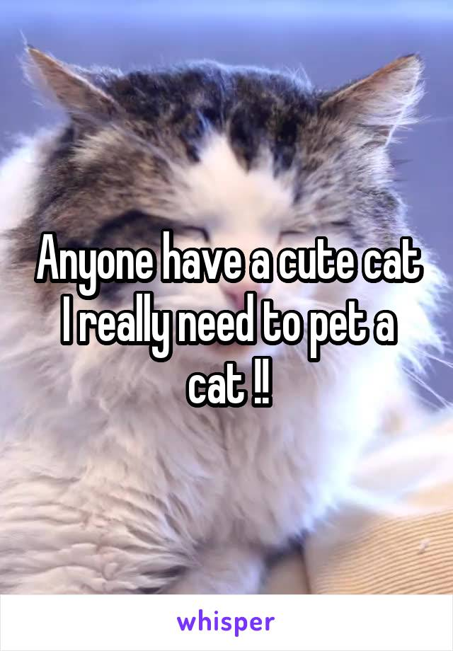 Anyone have a cute cat I really need to pet a cat !!