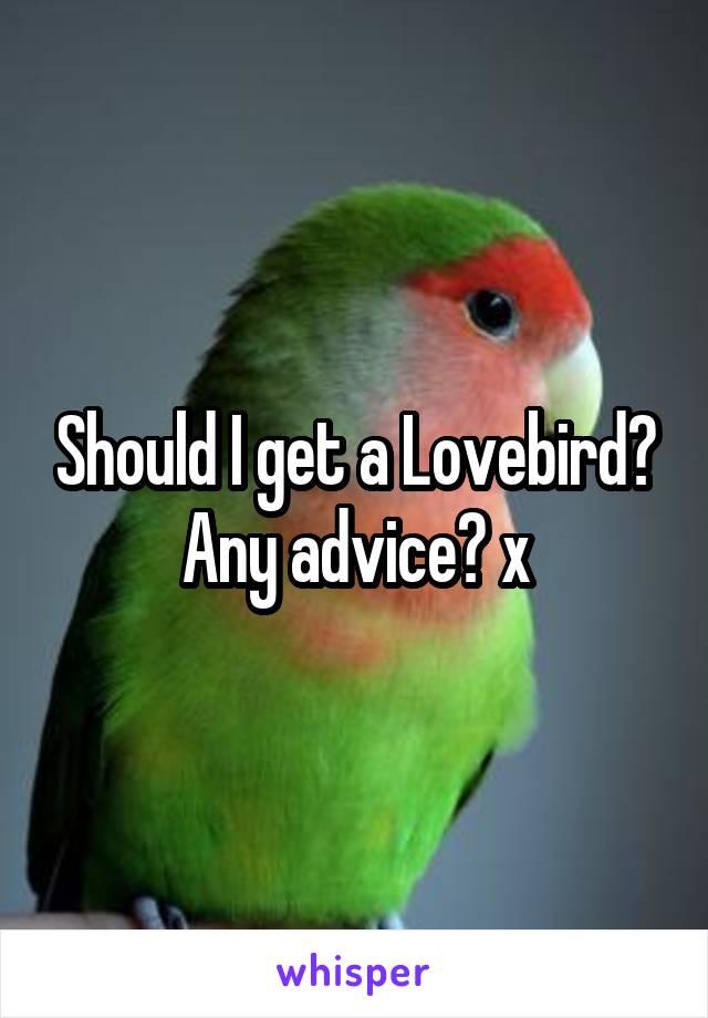 Should I get a Lovebird? Any advice? x