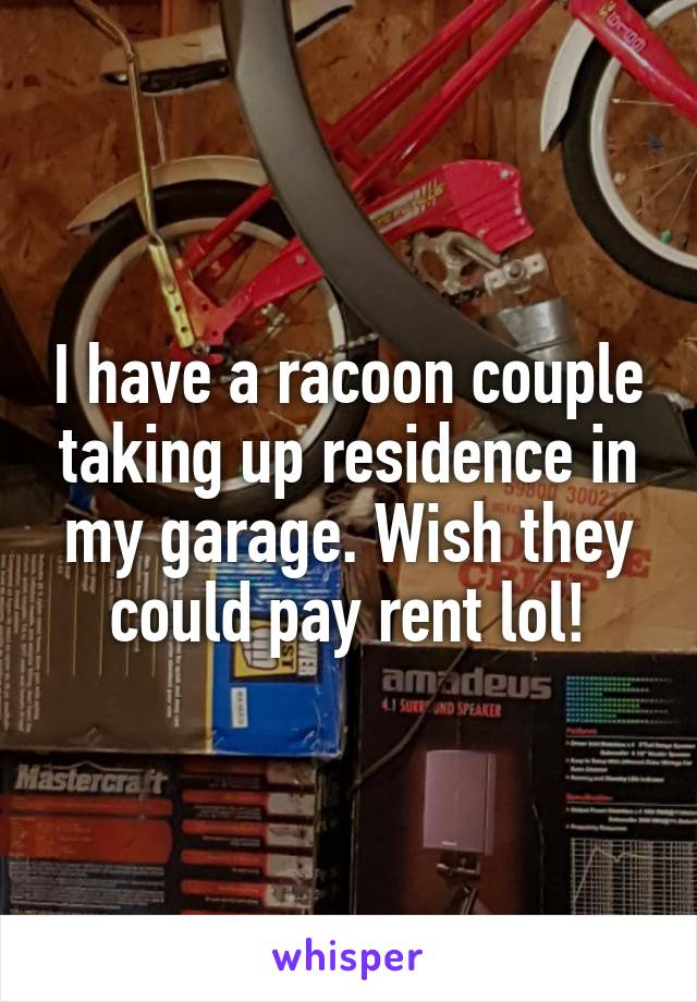 I have a racoon couple taking up residence in my garage. Wish they could pay rent lol!