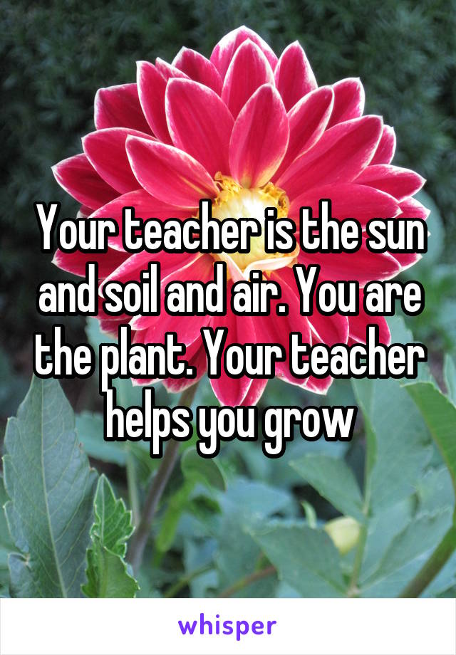 Your teacher is the sun and soil and air. You are the plant. Your teacher helps you grow