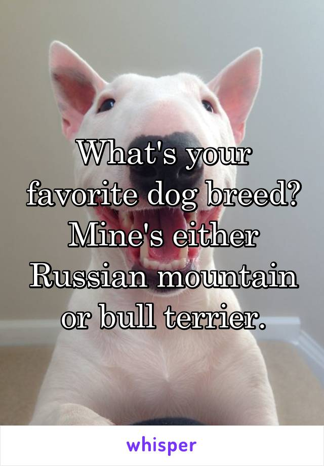 What's your favorite dog breed? Mine's either Russian mountain or bull terrier.